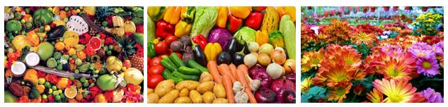 Organic Fertilizer - AGROSTAR